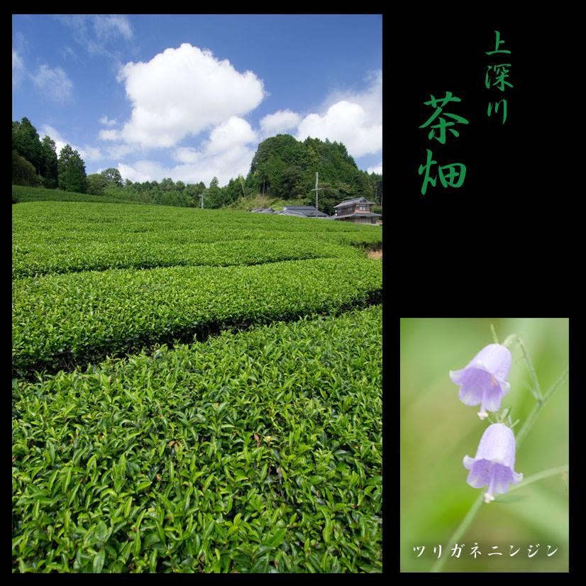 大和茶を買うなら産地で!!道の駅針テラスの農産物直売所 つげの畑高原屋を紹介します。